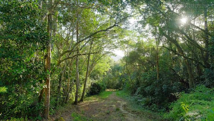 capa do curso Odisseia Fotográfica, episódio 2: Costa da Lagoa, Florianópolis-SC